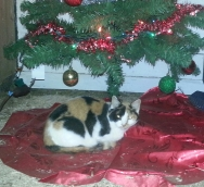 Mama-cat snuggled under the Christmas Tree