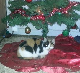 Mama-cat snuggled under the Christmas Tree