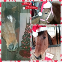 Christmas horse collage